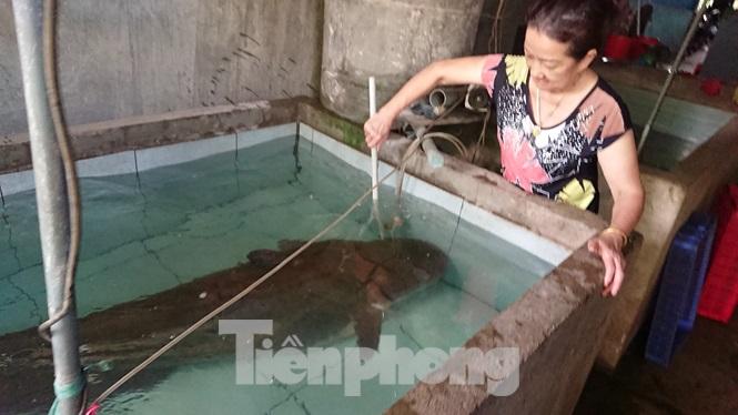 Câu được cá leo khủng nặng 80kg, dài hơn 2m ở sông Krông Ana - 1