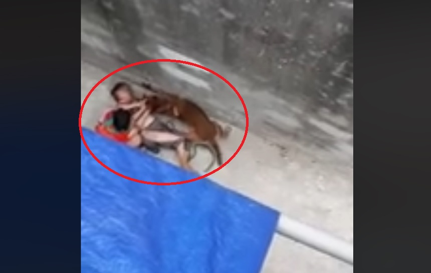 Clip: Chó nhà nuôi lao vào cắn bà ngoại, cháu gái giải cứu trong vô vọng - 1