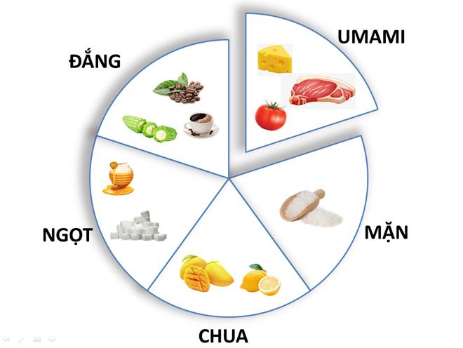 Vị umami – từ bàn ăn đến khám phá để đời - 1