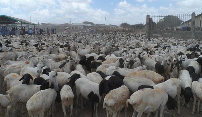 Những người du mục và những người bán du mục hay kiếm sống từ chăn nuôi chiếm phần lớn dân số.