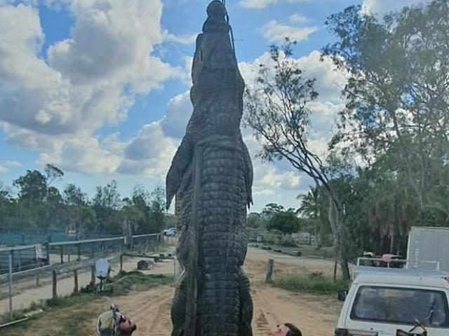 Úc: Mổ bụng cá sấu khổng lồ chết già, phát hiện điều đáng sợ