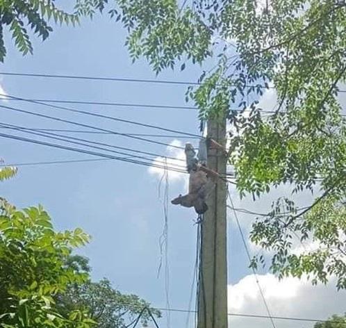 Tài xế xe tải bị điện giật treo lơ lửng trên cột điện - 1