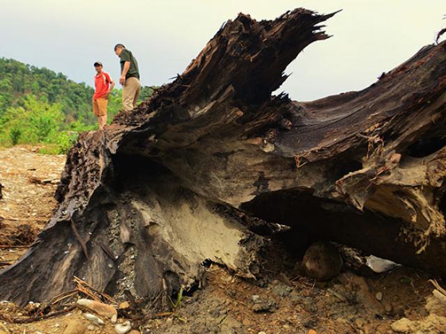 Ly kỳ chuyện 4 ngày lặn suối cưa cây gỗ quý kích thước khủng