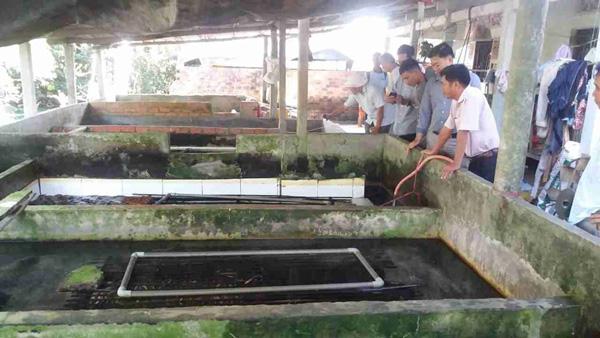 An Giang: Sống khỏe re bởi nghề nuôi lươn đồng trong bể xi măng - 1
