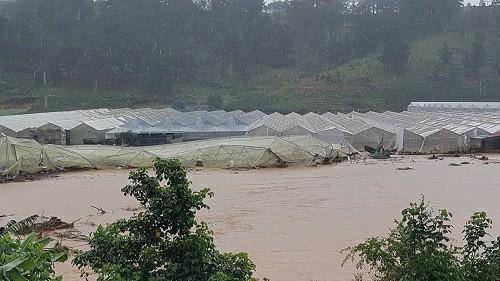 Nước mắt tuôn rơi ở Lâm Đồng: Mất cả trăm tỷ sau mưa lũ kinh hoàng - 1