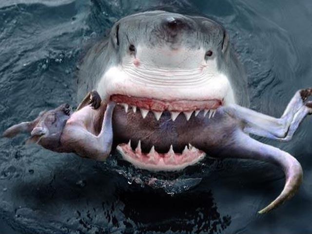 Nhìn gần những loài cá mập nguy hiểm nhất hành tinh