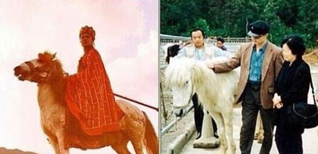 """Con ngựa trắng Đường Tăng cưỡi vốn là một chú quân mã ở Nội Mông (Trung Quốc), năm 1983 được """"xuất ngũ"""" chuyển sang làm diễn viên."""