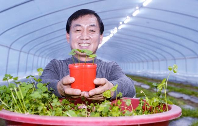 Không chỉ trang trí mà cỏ 4 lá của ông Hong In Heon có thể ăn được.