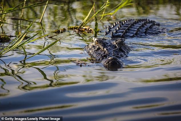 Philippines: Bé trai bị cá sấu lôi xuống sông, hôm sau tìm thấy cảnh đau lòng - 1