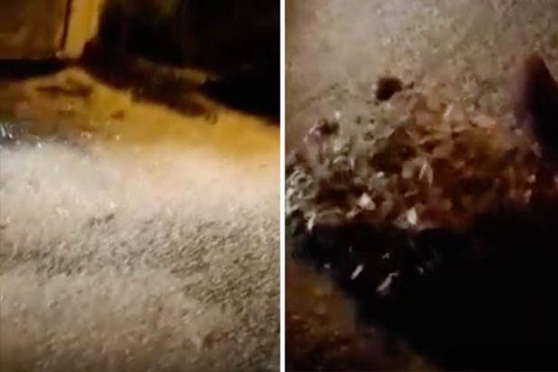 """Video: Sau khi làm """"chuyện ấy"""", hàng triệu con ngài lăn ra chết phủ trắng đường phố Nga - 1"""