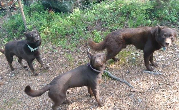 """Gần 1 triệu người háo hức xem đoạn video 3 chú chó đen """"đóng băng"""" - 1"""
