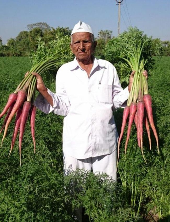 Năm 13 tuổi, ông Vallabhbhai Vasrambhai Marvaniya (sống ở Ấn Độ) phải nghỉ học để giúp cha mẹ công việc ở trang trại rộng 2ha trồng ngũ cốc, lạc, ngô để bán, còn cà rốt được trồng để nuôi gia súc.