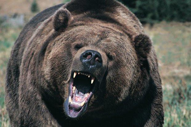 Gấu đen đột nhập vào nhà qua cửa, lúc ra đi thẳng qua tường tạo nên lỗ hổng lớn - 1