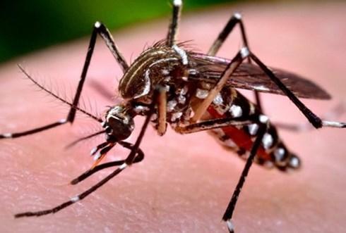 Đắk Lắk: Bé trai 10 tuổi tử vong nghi do sốt xuất huyết - 1