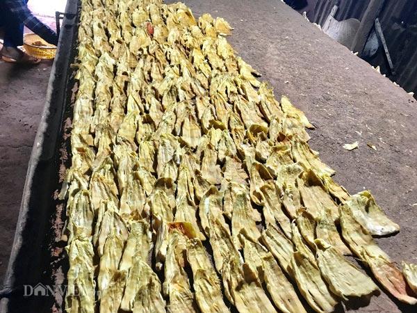 """Nghề hái ra tiền ở Kon Tum: Sấy măng rừng chỉ 1 vụ đã lãi """"khủng"""" - 1"""
