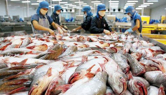 Giá cá tra sụt giảm, cổ phiếu DN cá tra lại tăng trưởng… âm - 1