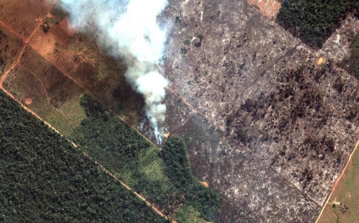 Những sự thật về cháy rừng Amazon - 1