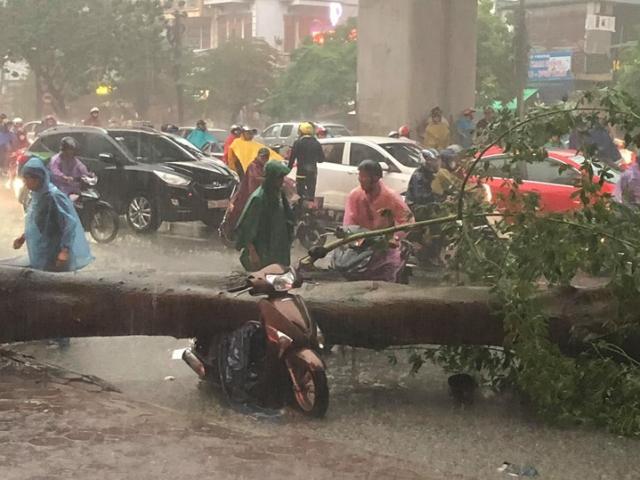 Hà Nội: Cuồng phong bất ngờ trước bão số 4, cây đổ la liệt, một người thiệt mạng