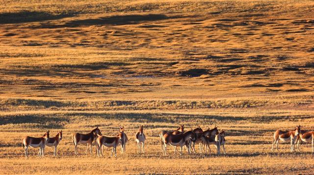 Về nơi con người không thể sống nhưng động vật hoang dã lại phát triển mạnh - 1
