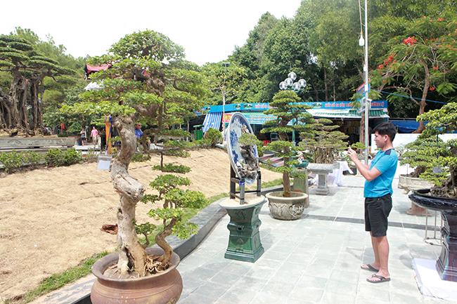 Xuất hiện tại triển lãm TP Sầm Sơn (Thanh Hóa), cặp hoa giấy bonsai của anh Nguyễn Đình Sáng (Sầm Sơn) thu hút sự chú ý của du khách, giới chơi cây đến chiêm ngưỡng.