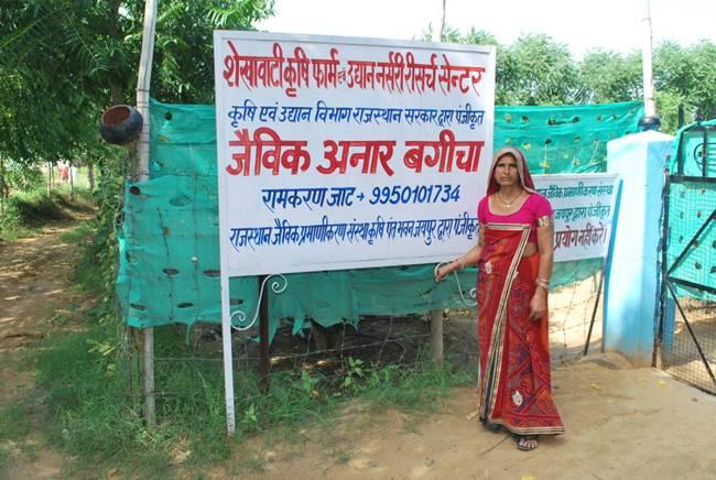 Năm 2008, sau khi mảnh đất của gia đình được chia cho 3 anh em,Ram Karan Khedar và vợ là Santosh Devi ở Ấn Độ bắt đầu trồng trọt trên mảnh đất 0,5ha.