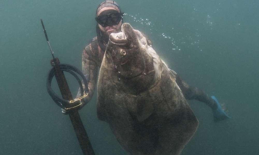 Thợ lặn câu được thủy quái có kích thước siêu to, khổng lồ ở Mỹ - 1