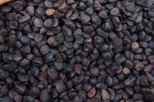 """Từ loại hạt phổ biến ở Việt Nam có thể xin thoải mái, nay có giá bán """"đắt như vàng"""" - 1"""