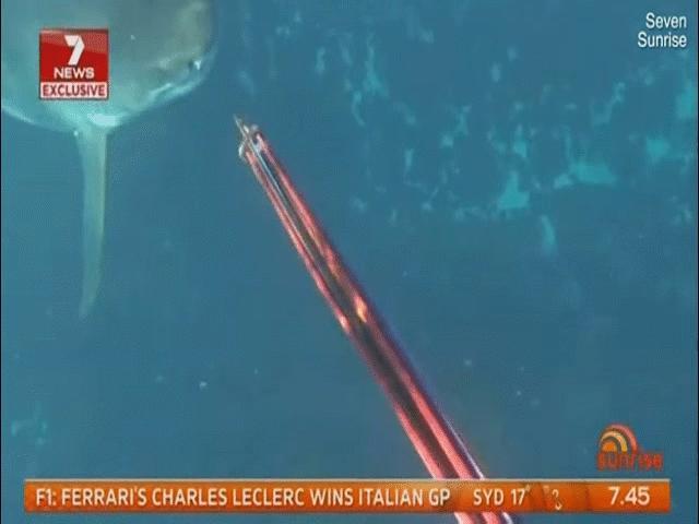 Úc: 9 phút kinh hoàng đối đầu với cá mập trắng khổng lồ