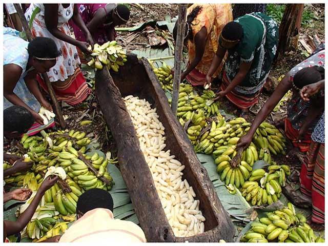 Trộn 500 quả chuối với cỏ khô rồi đem chôn thành bia của người Ấn Độ - 1