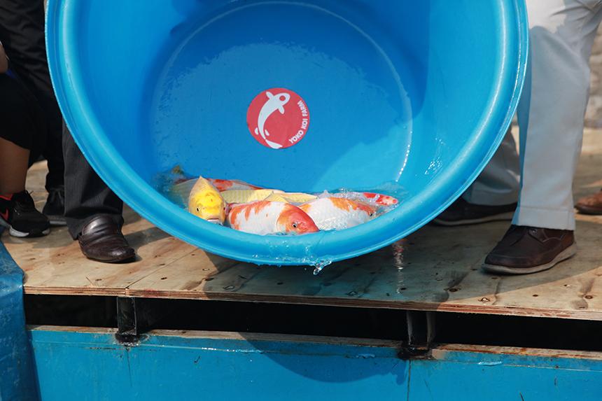 """Clip: Thả hàng trăm con cá chép xuống sông Tô Lịch khi """"bảo bối"""" của Nhật hết hạn thử nghiệm - 4"""