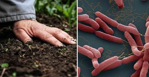 Bộ Y tế khuyến cáo 5 cách phòng tránh bệnh Whitmore - 1