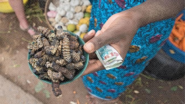 Sâu mopanethuộc loàiGonimbrasia belina. Chúngđược đặt tên là mopane, vì ăn lá cây mopane. Loại sâu này chỉ có thể được tìm thấy ở các quốc gia nằm ở khu vực phía Nam châu Phi.