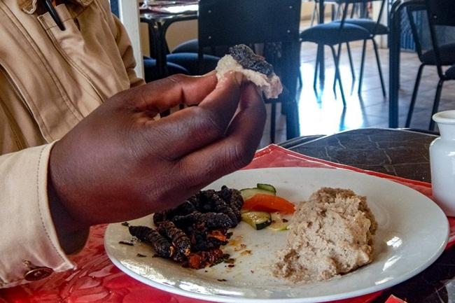 Ở khu vực phía Nam châu Phi, người ta ước tính có 9,5 tỷ ấu trùng sâu mopane được thu hoạch trị giá tới 85 triệu USD, trong đó 40% được các phụ nữ từ các vùng nông thôn nghèo sản xuất.
