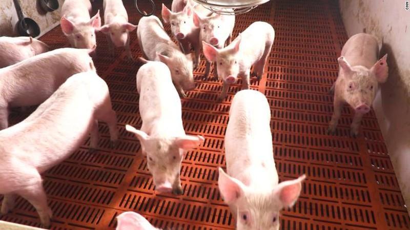 Trung Quốc xuất 10.000 tấn thịt lợn từ nguồn dự trữ quốc gia - 1
