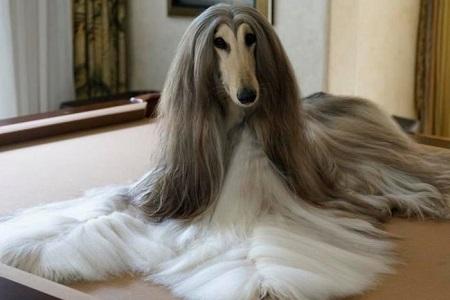 Chi gần 350 triệu để sắm dụng cụ chải lông cho chó