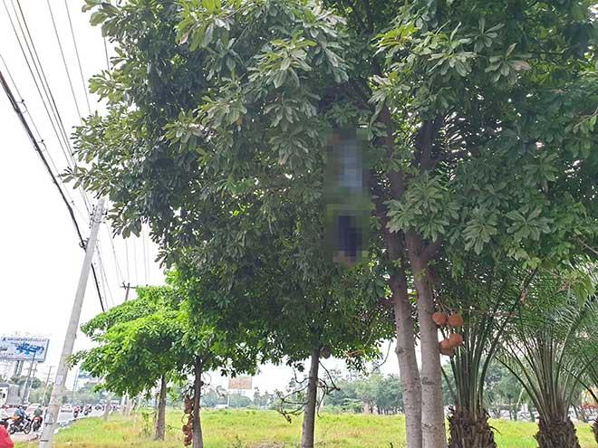 Hoảng hồn phát hiện thi thể người đàn ông treo lơ lửng trên cây ngay sát quốc lộ - 1