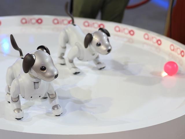 Ảnh, video chú cún Aibo tích hợp trí tuệ nhân tạo của Sony
