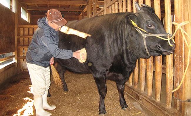Nhật Bản nổi tiếng với nhiều loại thịt bò chất lượng tốt trong đó thịt bò Matsuaka có giá đắt đỏ khiến nhiều người phải ngạc nhiên.