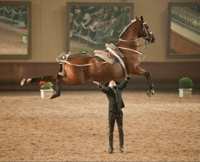 Dăm ba chú ngựa này em bế đơn giản.