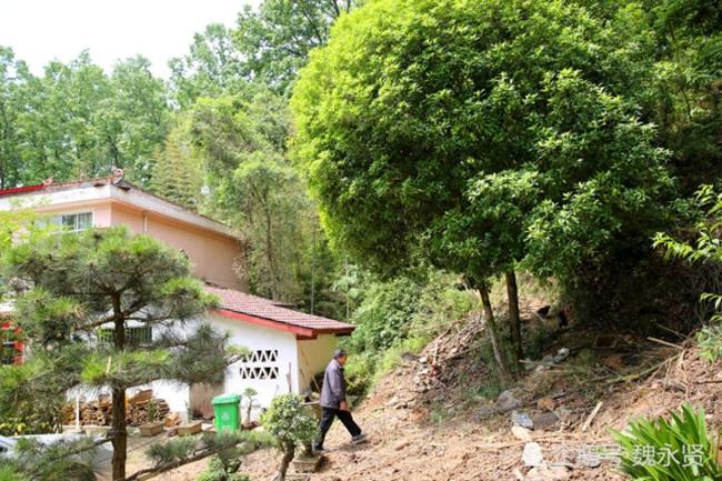 Ông cũng tự uốn các cây trước nhà tạo thế đẹp. Cây cối xung quanh nhà đưa đến một màu xanh yên bình và nhàn nhã.