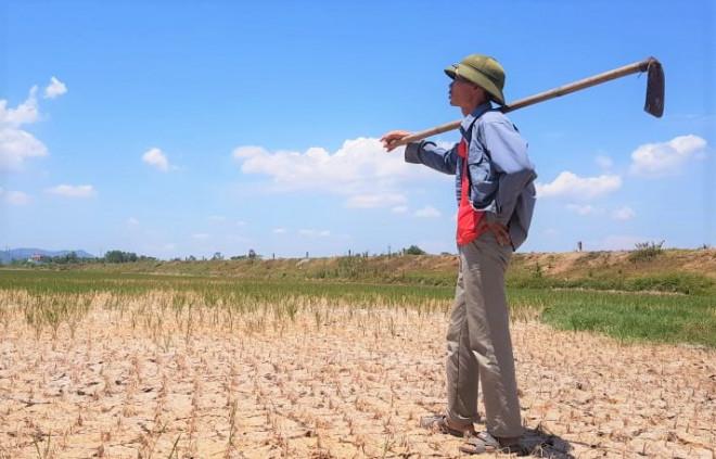 Hàng ngàn ha lúa chết cháy, ruộng đồng nứt toác vì đợt nắng nóng kỉ lục - 1