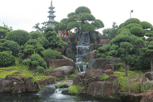 Cây sung tọa lạc trên một đỉnh đồi nhân tạo, xung quanh là những viên đá quý còn thô rất có giá trị của ông Lê Văn Dũng (TP. Sông Công, Thái Nguyên) được rất nhiều du khách, giới chơi cây cảnh thích thú, lên tận nơi ngắm cây