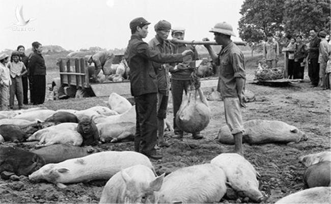 """Thời bao cấp chưa có thịt bò nhiều như bây giờ và người dân cũng không quen ăn thịt bò, hải sản lại càng hiếm. Các gia đình đều tự trồng trọt, chăn nuôi thêm để cải thiện đời sống. Thịt lợn thời điểm đó """"lên ngôi"""", ai ai cũng nuôi lợn để tăng gia."""