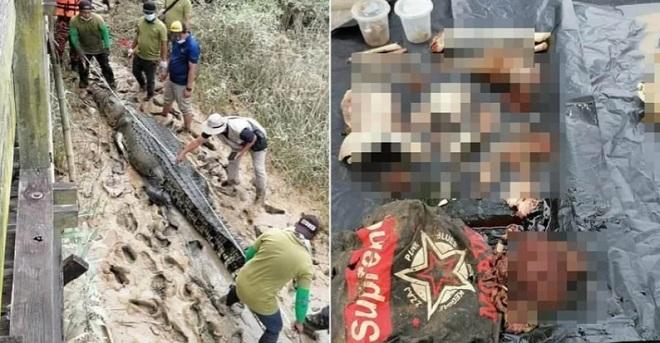 Malaysia: Mổ bụng cá sấu khổng lồ dài 4,7m, phát hiện nguyên nhân thiếu niên 14 tuổi mất tích - 1