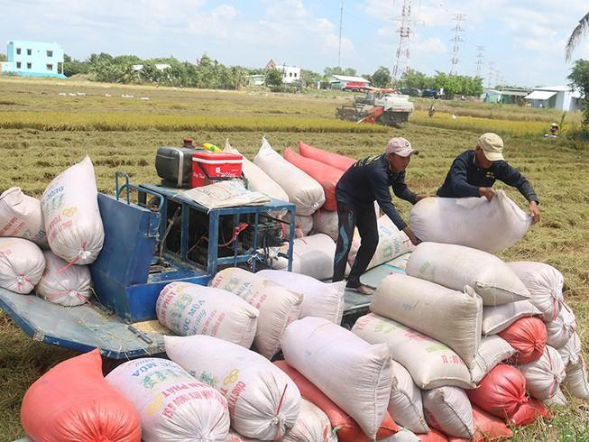 Bán 80.000 tấn gạo Việt miễn thuế sang EU ra sao? - 1