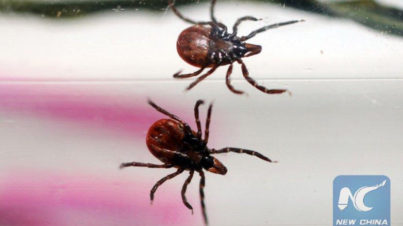 TQ: Virus Bunya chủng mới có thể truyền từ người sang người, 9 ca tử vong - 1