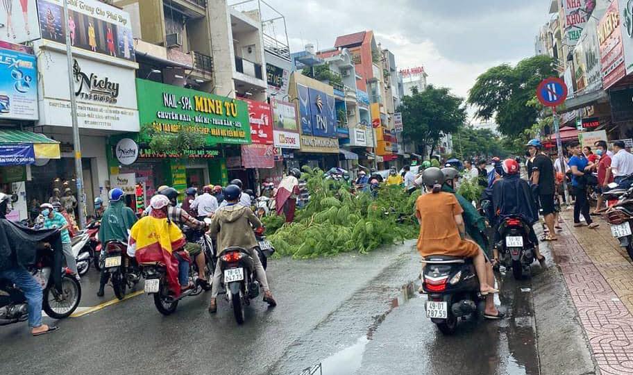 Phượng bật gốc đổ ập xuống phố Sài Gòn, lộ ra phần rễ trơ trọi - 1