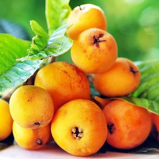 """Nhiều người Việt sống ở Nhật bất ngờ khi biết quả Biwa được bán đắt đỏ như vậy bởi ở Nhật, biwa được xếp vào dạng """"bình dân"""" và thuộc dòng trái cây có giá rẻ."""