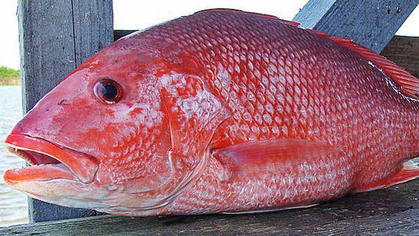 Từ vụ ngộ độc cá hồng, chuyên gia chỉ rõ những bộ phận này tuyệt đối không nên ăn - 1