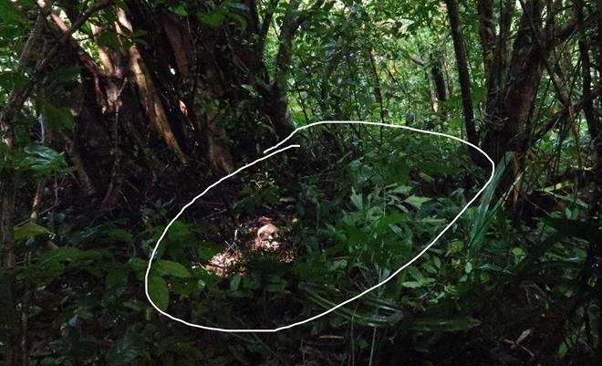 Phát hiện 1 bộ xương người trên Núi Cấm - 1